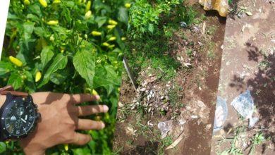 Tips Simple Menjaga Kebun Pertanian dari Sampah